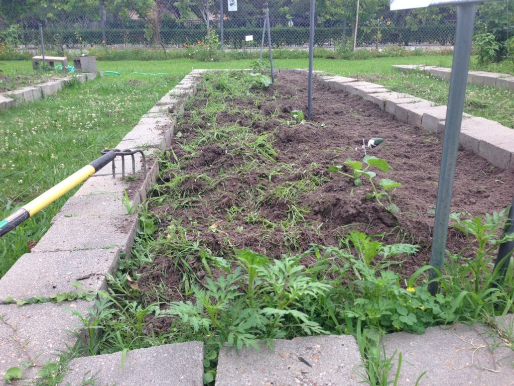 Sustainable Weed Control Measures