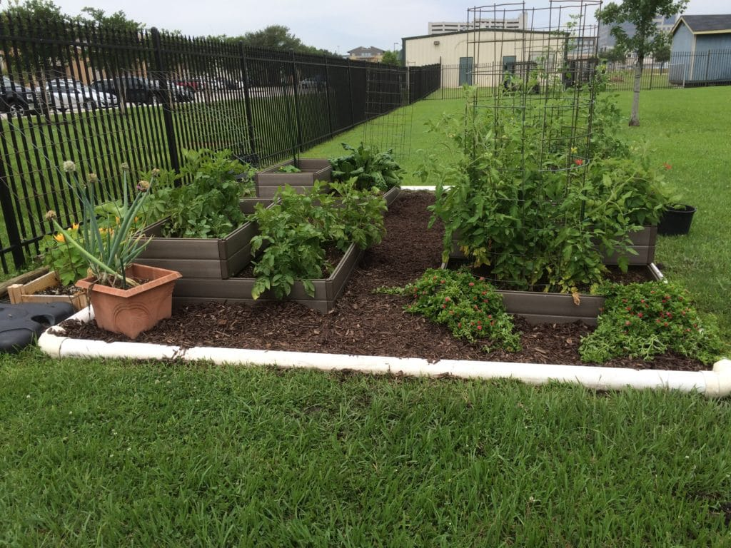6 Basics of the Vegetable Garden in Houston