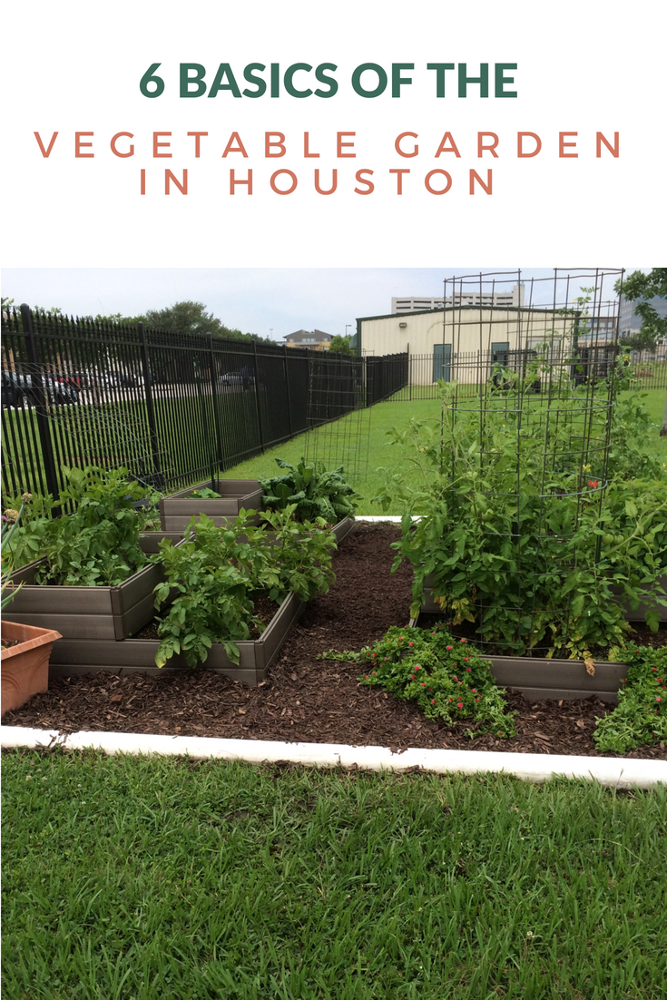 Vegetable gardening in Houston