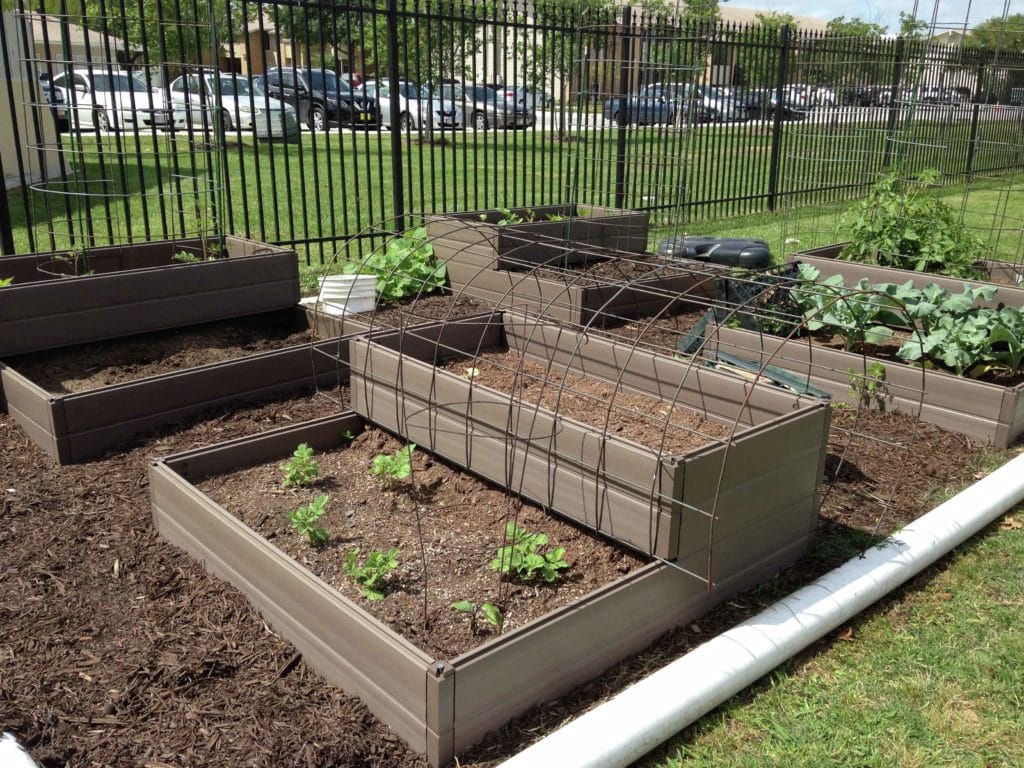 Kindergarten vegetable garden