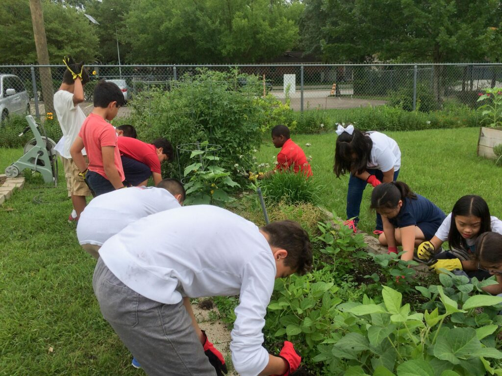 Hurricane Harvey and our school garden