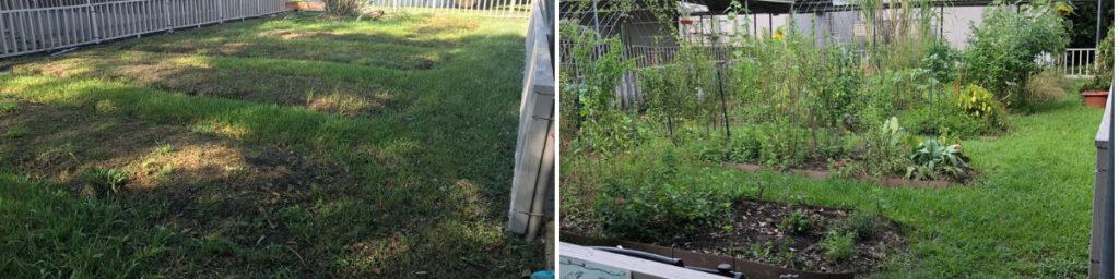 Edible butterfly garden